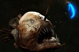 Deep Dwelling Anglerfish Gets Caught In Rare Video